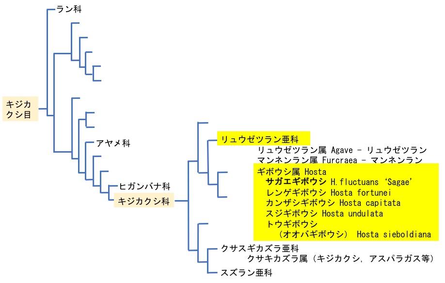 f:id:yachikusakusaki:20170702141006j:plain