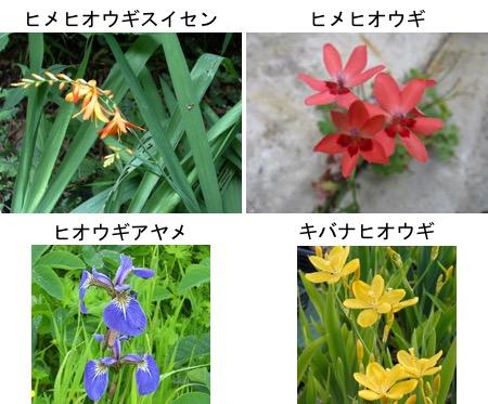 f:id:yachikusakusaki:20170703001916j:plain