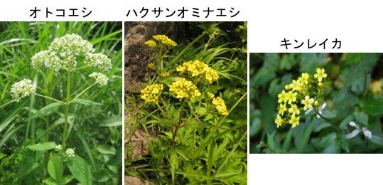f:id:yachikusakusaki:20170705024637j:plain
