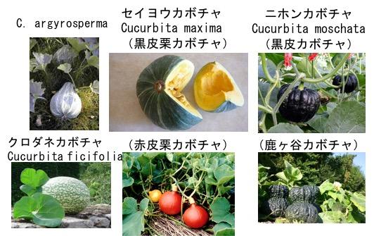 f:id:yachikusakusaki:20170708003926j:plain