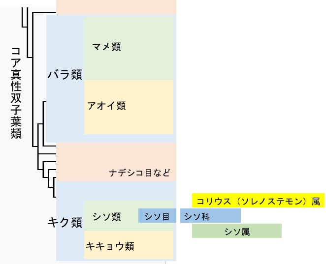 f:id:yachikusakusaki:20170712013355j:plain