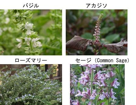 f:id:yachikusakusaki:20170712014506j:plain