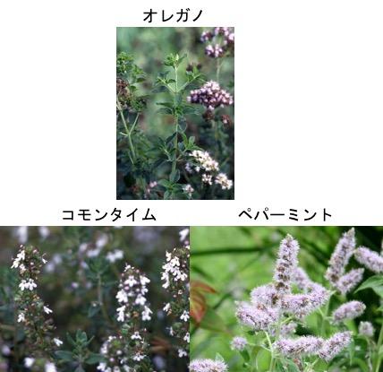 f:id:yachikusakusaki:20170712014522j:plain