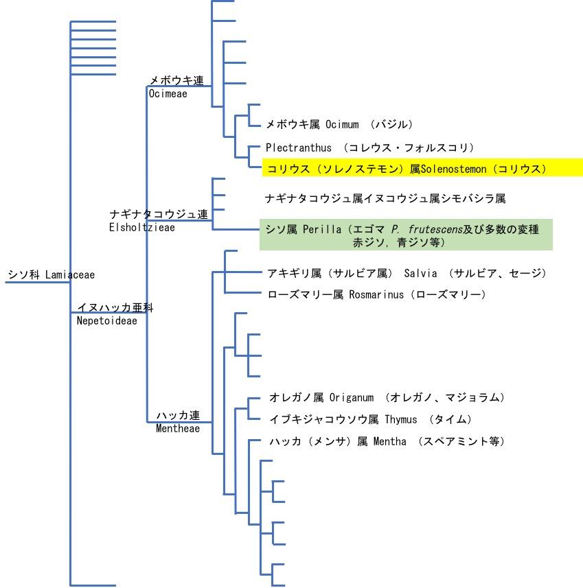 f:id:yachikusakusaki:20170712020438j:plain