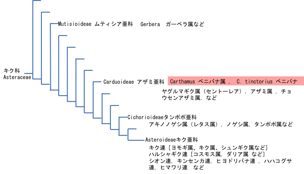 f:id:yachikusakusaki:20170713020031j:plain