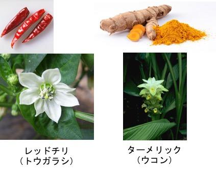 f:id:yachikusakusaki:20170716031214j:plain