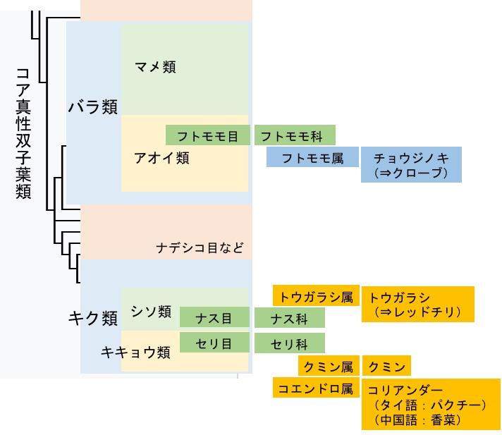 f:id:yachikusakusaki:20170716032328j:plain