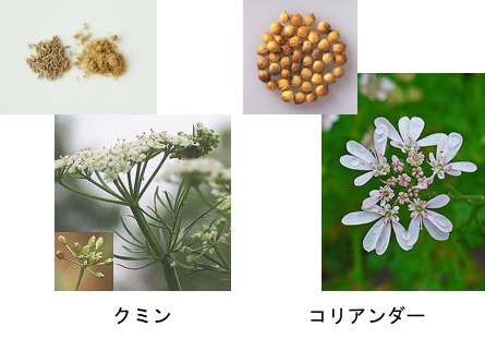f:id:yachikusakusaki:20170716040150j:plain
