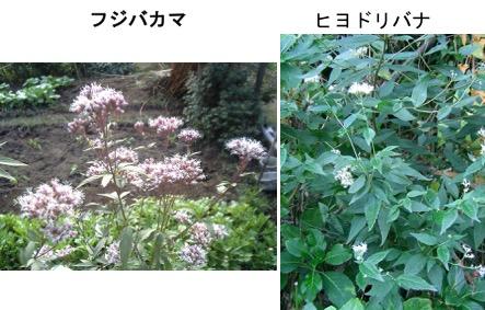 f:id:yachikusakusaki:20170721011531j:plain