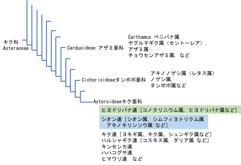 f:id:yachikusakusaki:20170721011856j:plain