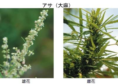f:id:yachikusakusaki:20170731004500j:plain