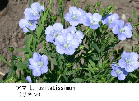 f:id:yachikusakusaki:20170731010804j:plain
