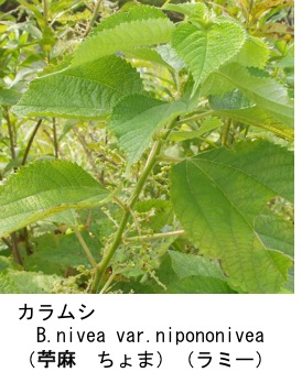 f:id:yachikusakusaki:20170731011541j:plain