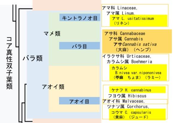 f:id:yachikusakusaki:20170731012814j:plain