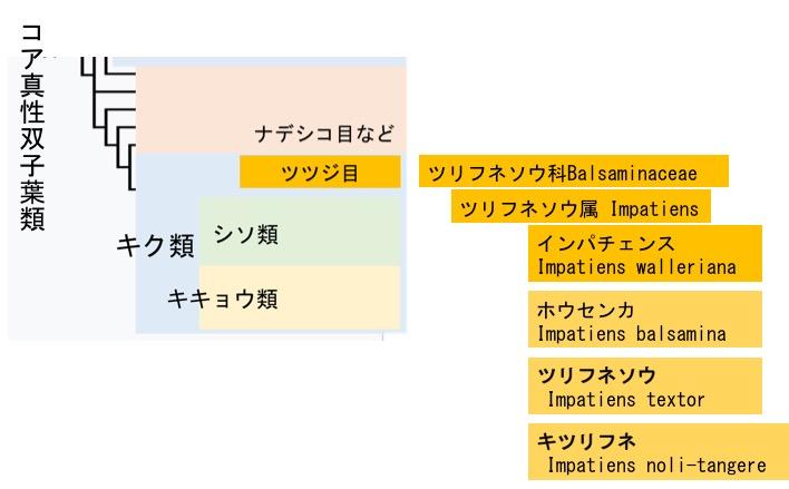f:id:yachikusakusaki:20170801003733j:plain