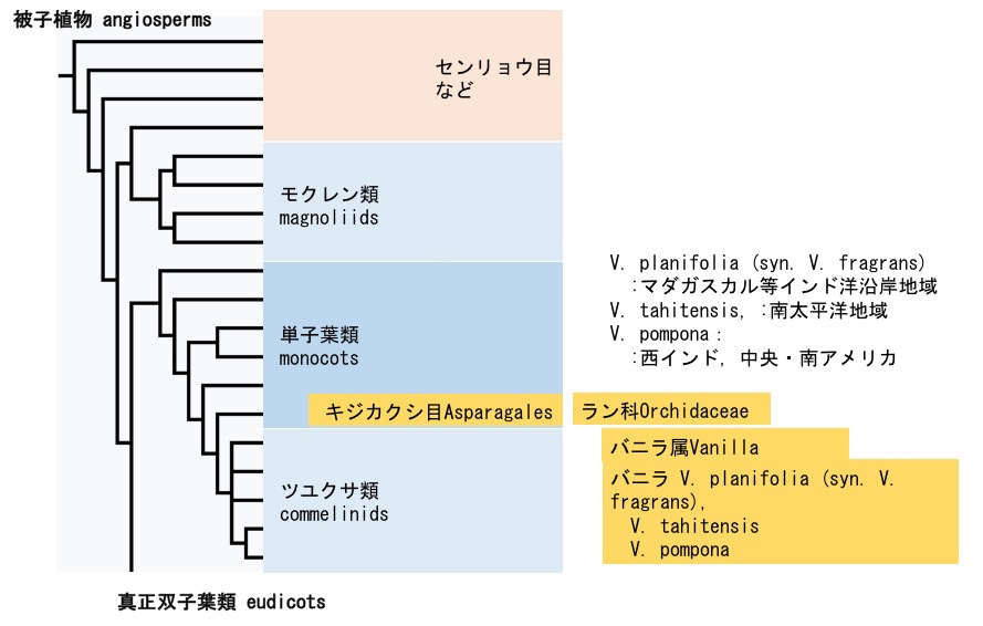 f:id:yachikusakusaki:20170806032620j:plain