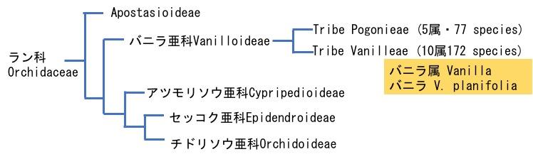 f:id:yachikusakusaki:20170806032734j:plain