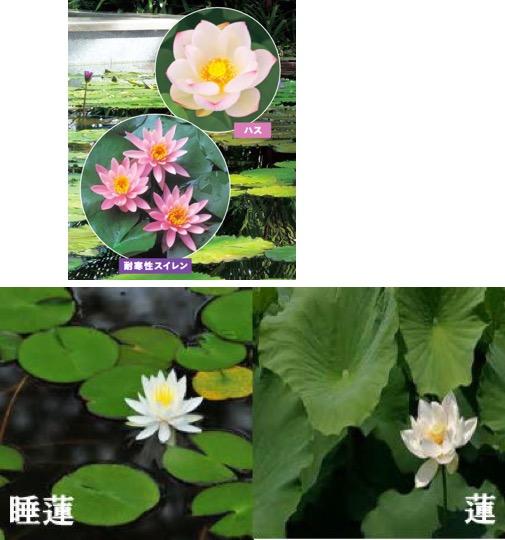 f:id:yachikusakusaki:20170808005015j:plain