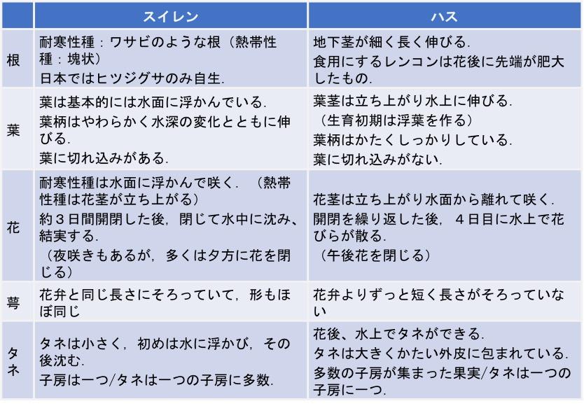 f:id:yachikusakusaki:20170808005554j:plain