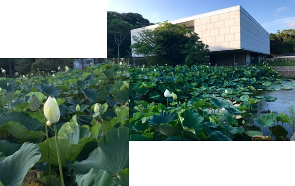 f:id:yachikusakusaki:20170808012344j:plain