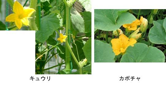 f:id:yachikusakusaki:20170811224256j:plain