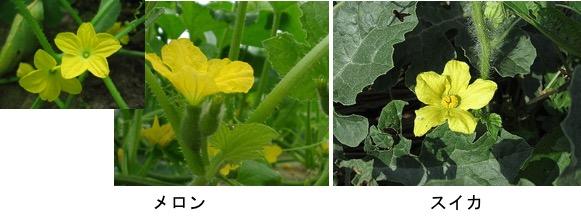 f:id:yachikusakusaki:20170811224642j:plain