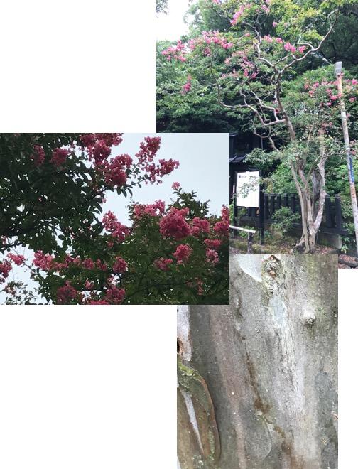 f:id:yachikusakusaki:20170813024811j:plain