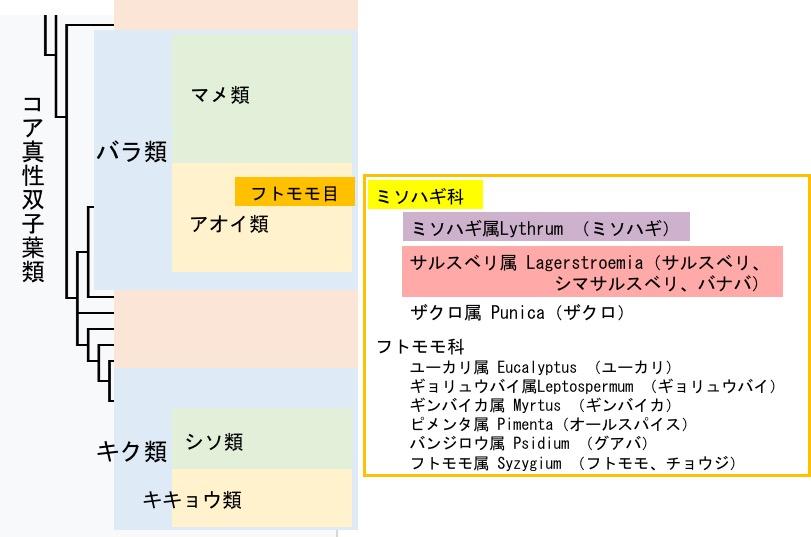 f:id:yachikusakusaki:20170813040617j:plain