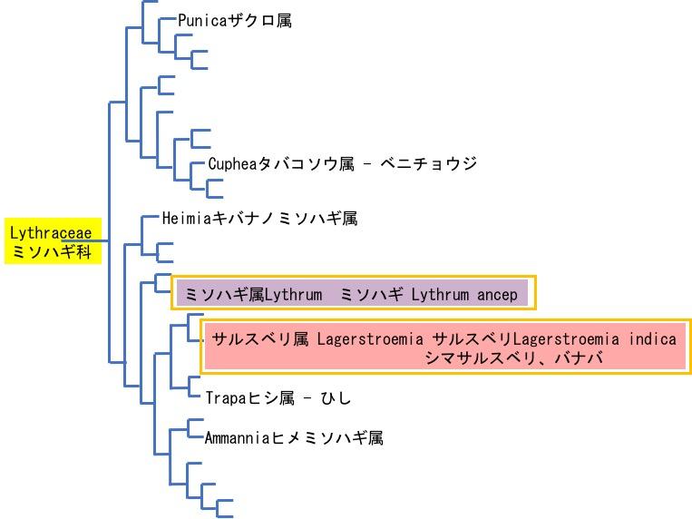 f:id:yachikusakusaki:20170813040646j:plain