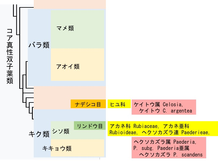 f:id:yachikusakusaki:20170819004851j:plain