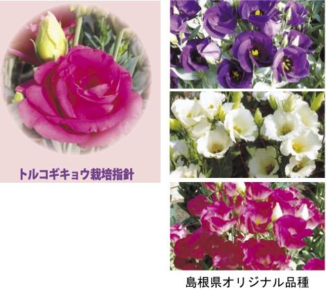 f:id:yachikusakusaki:20170821005627j:plain