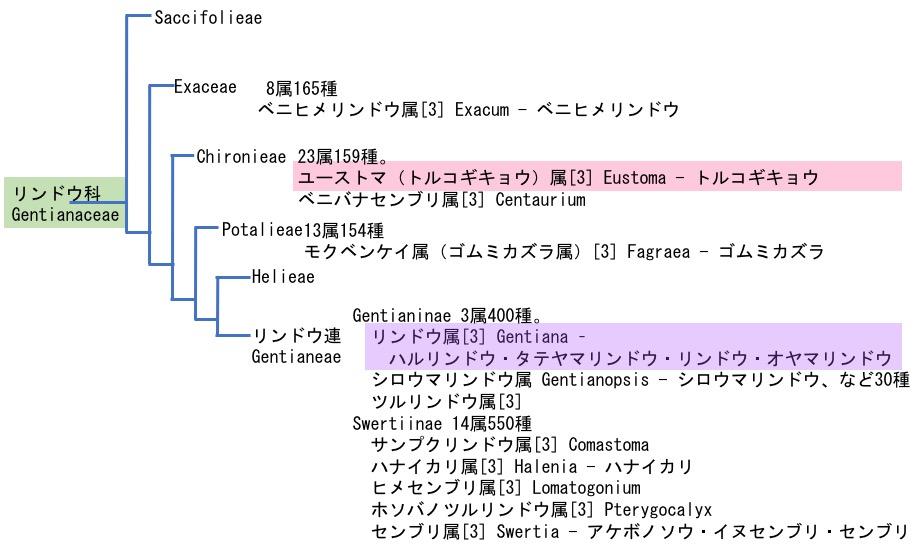 f:id:yachikusakusaki:20170821015256j:plain