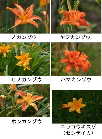f:id:yachikusakusaki:20170825004047j:plain