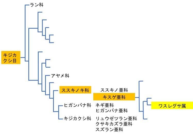 f:id:yachikusakusaki:20170825023830j:plain