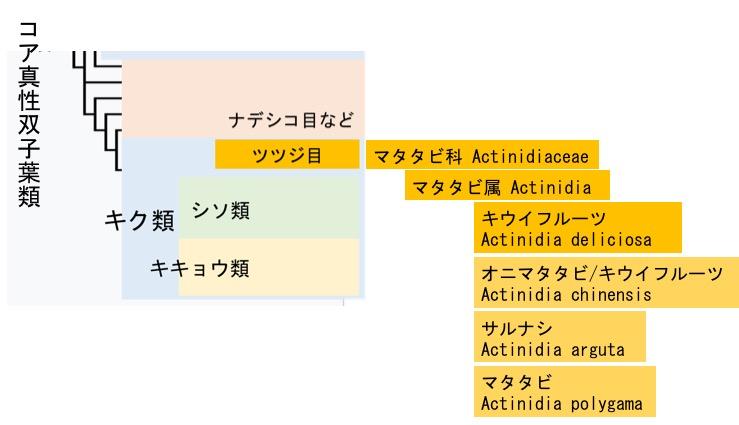 f:id:yachikusakusaki:20170826004643j:plain