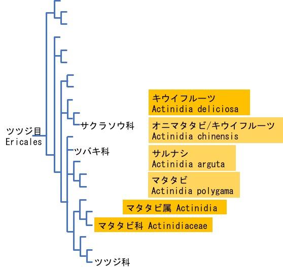 f:id:yachikusakusaki:20170826004658j:plain