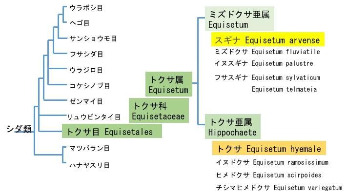 f:id:yachikusakusaki:20170827014927j:plain