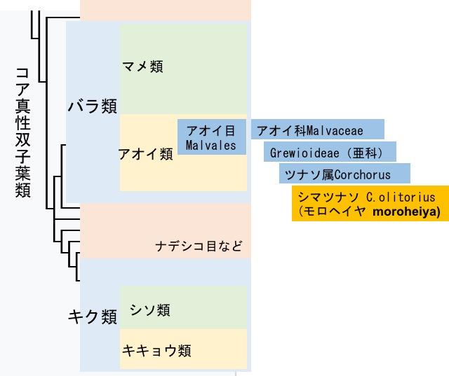 f:id:yachikusakusaki:20170828235957j:plain
