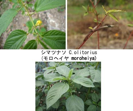 f:id:yachikusakusaki:20170829000400j:plain