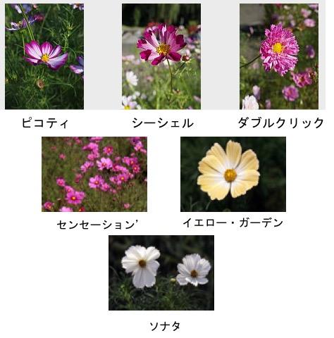 f:id:yachikusakusaki:20170831021253j:plain