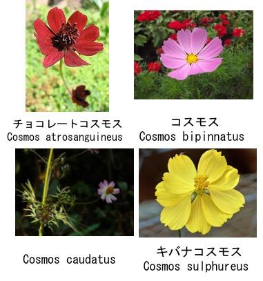f:id:yachikusakusaki:20170831022749j:plain