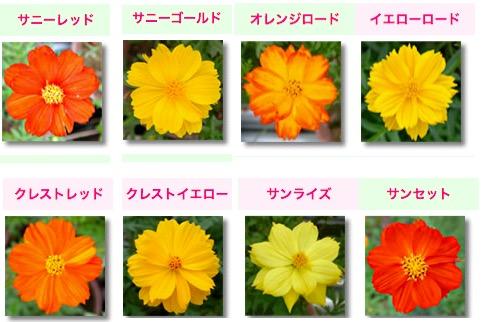 f:id:yachikusakusaki:20170831023006j:plain
