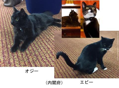 f:id:yachikusakusaki:20170902004624j:plain