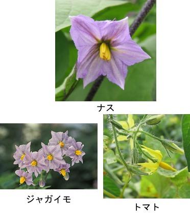 f:id:yachikusakusaki:20170906020623j:plain