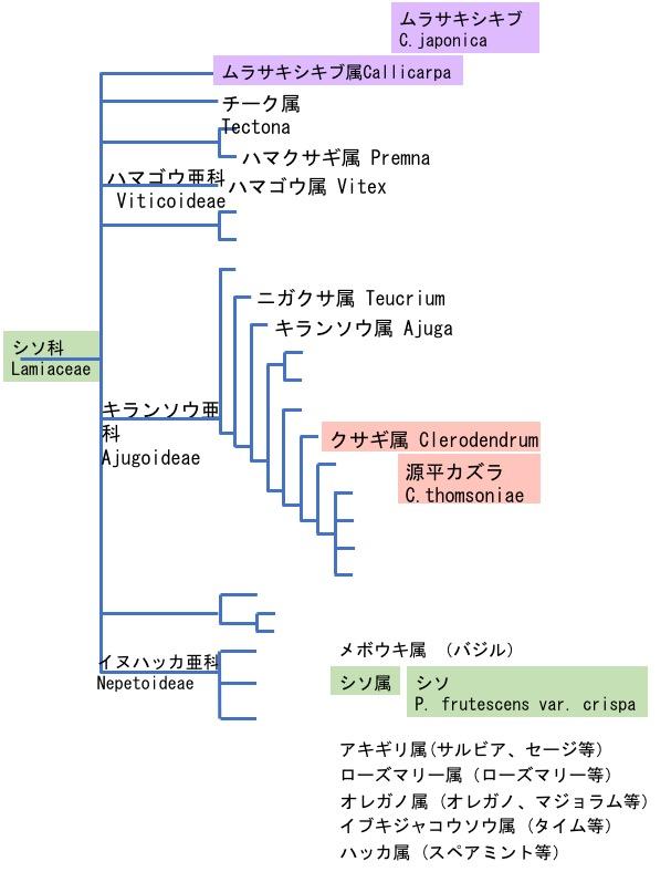 f:id:yachikusakusaki:20170907002807j:plain