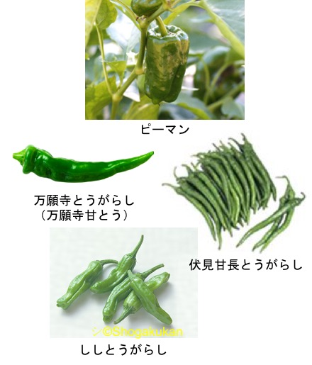 f:id:yachikusakusaki:20170909235212j:plain