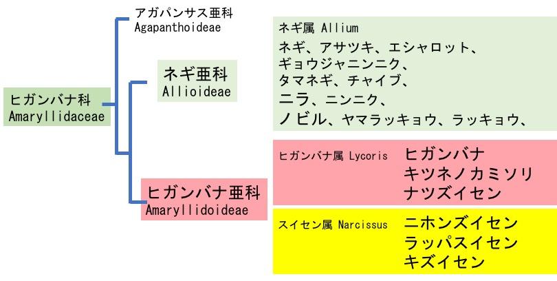 f:id:yachikusakusaki:20170919011944j:plain