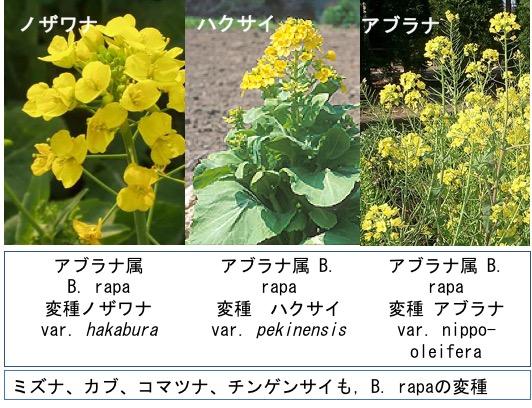 f:id:yachikusakusaki:20170921210727j:plain