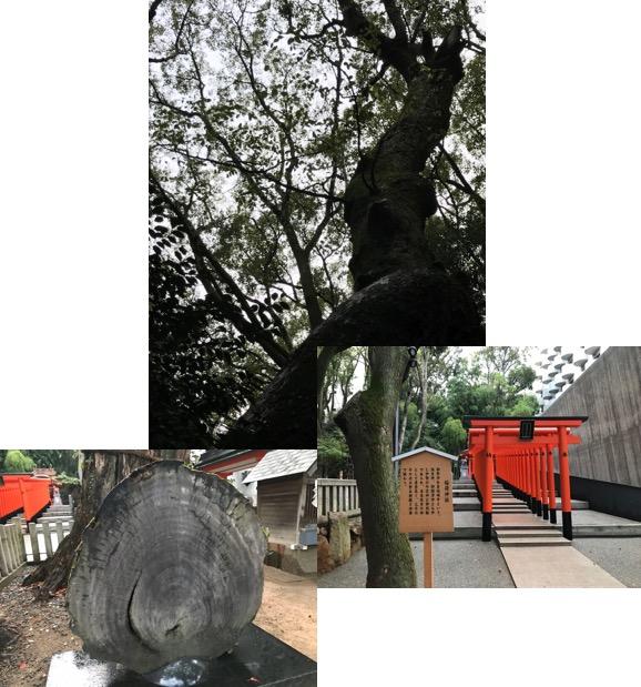 f:id:yachikusakusaki:20170923013816j:plain
