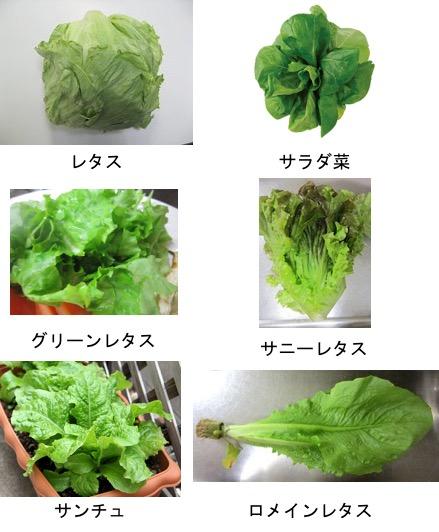 f:id:yachikusakusaki:20170924023636j:plain